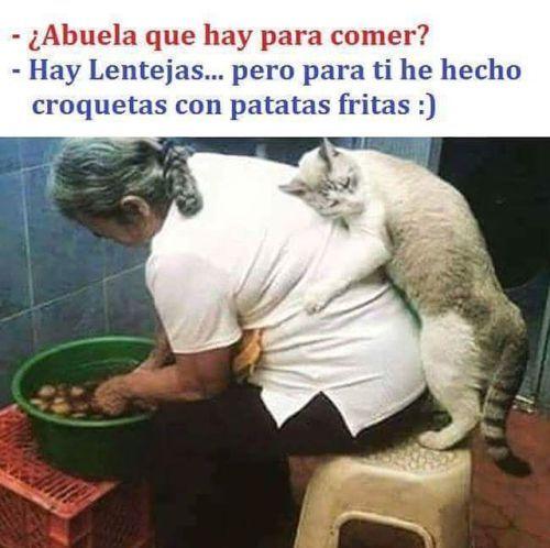 Abuela que hay para comer, gato