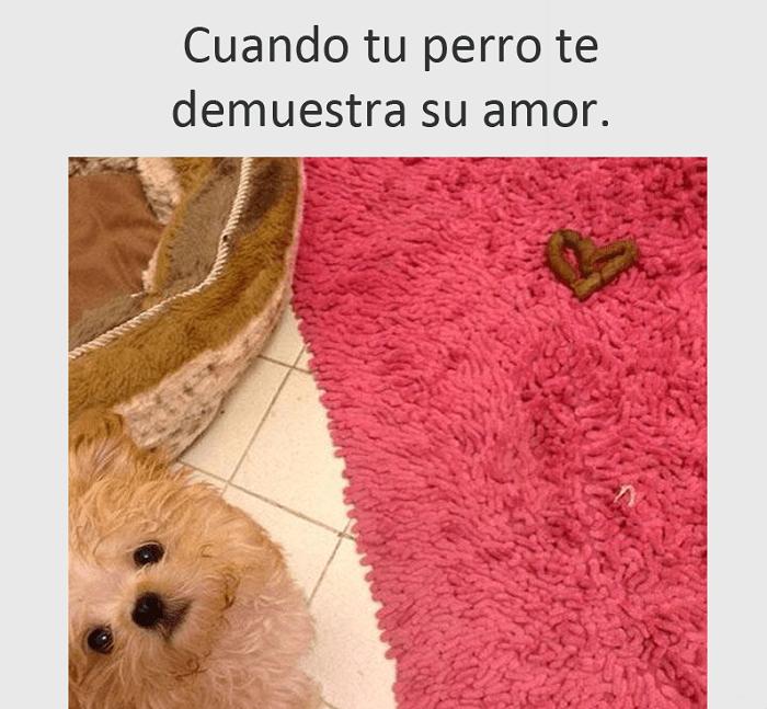 Amor de perrito