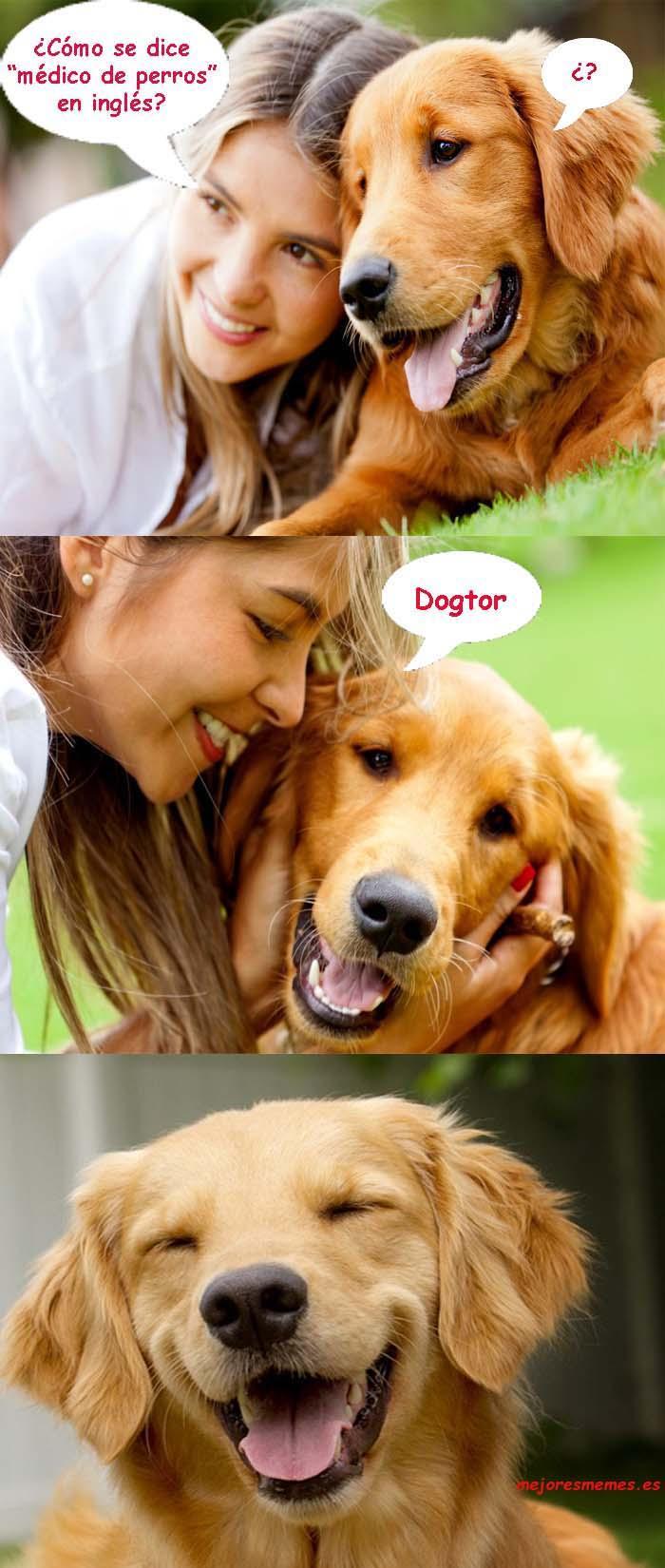 Cómo se dice médico de perros