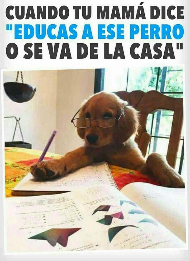 Educa ese perro