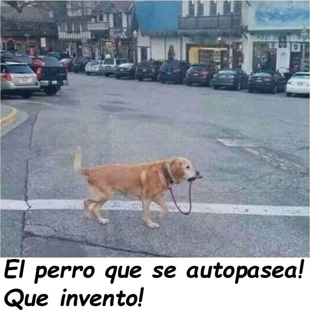 El perro que se pasea solo