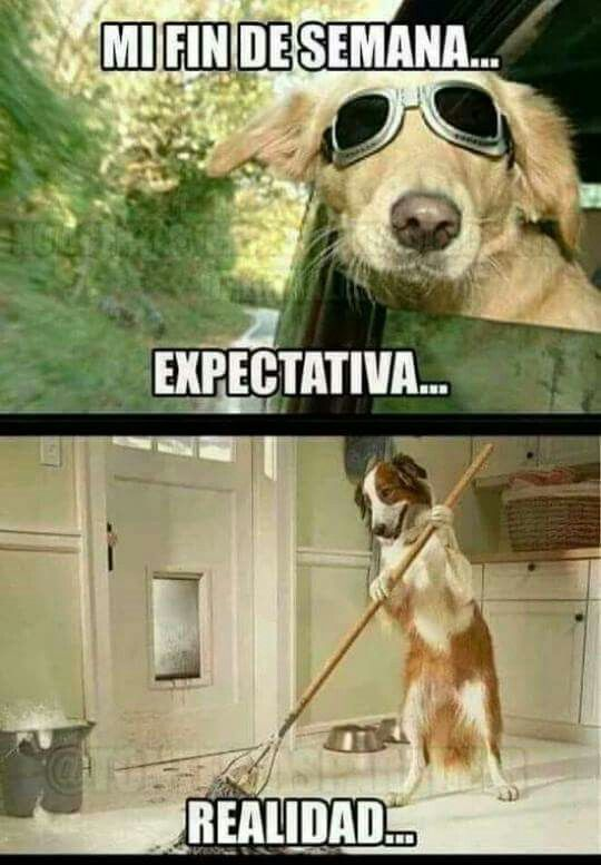 Fin de semana expectativa realidad perro