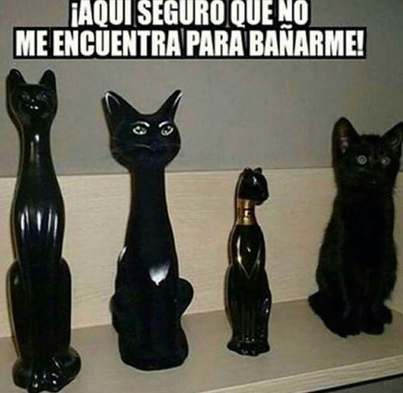 Gato camuflado baño