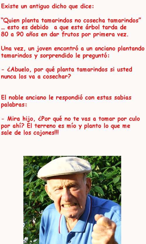 El anciano sabio y el tamarindo