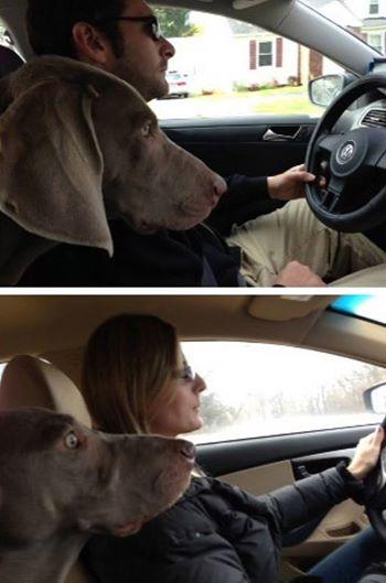 Perro hombre conduce mujer conduce