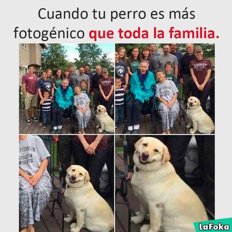 Perro fotogénico
