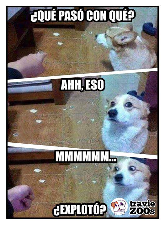 Que paso perro travieso