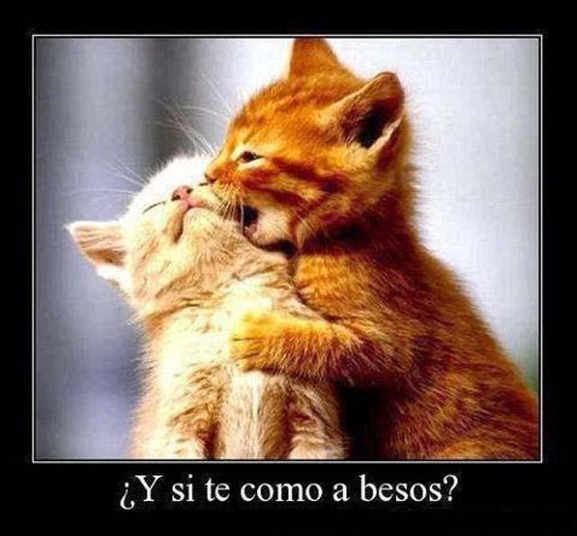 Te como a besos