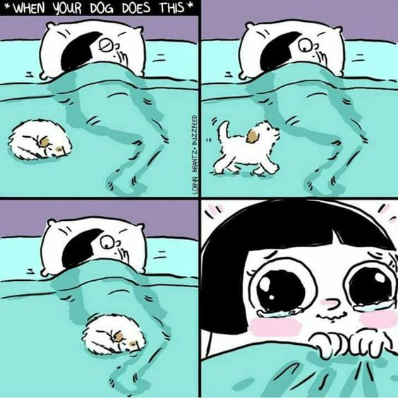 When your dog does this
