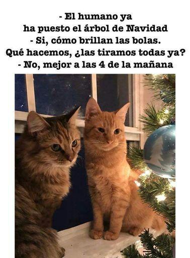 Árbol Navidad y gatos