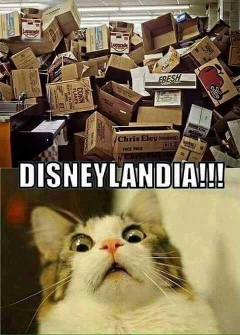 Disneylandia para gatos