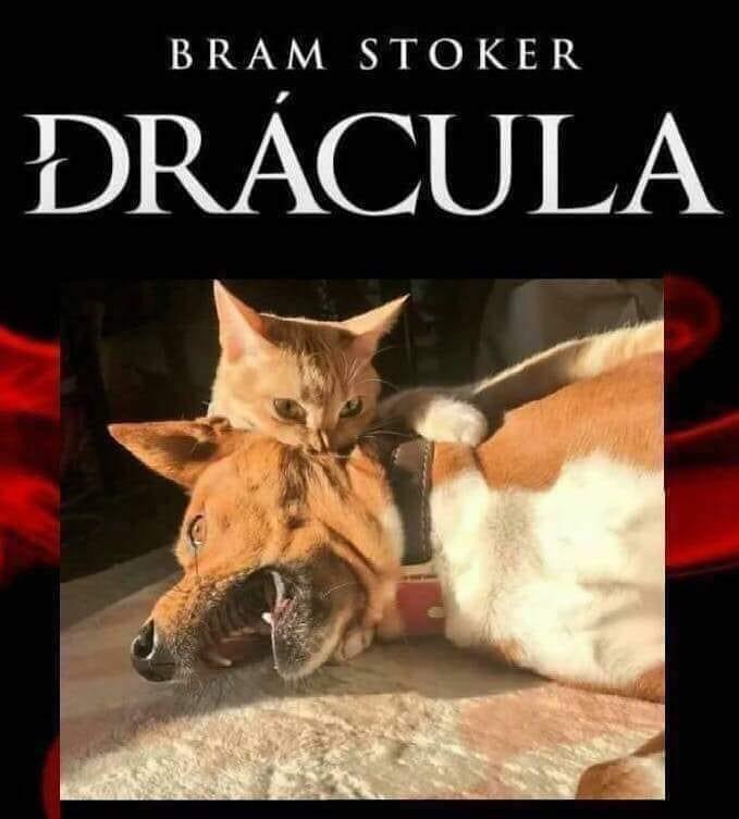 Drácula gato