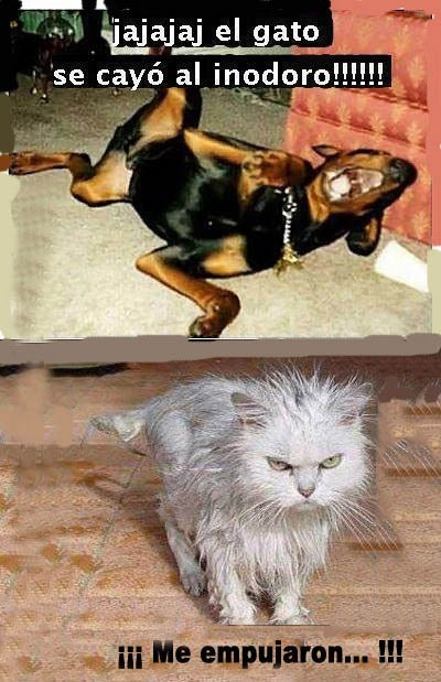El gato se cayó al inodoro