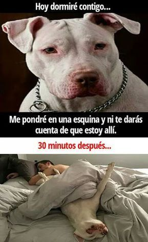 Hoy dormiré contigo en una esquina perros