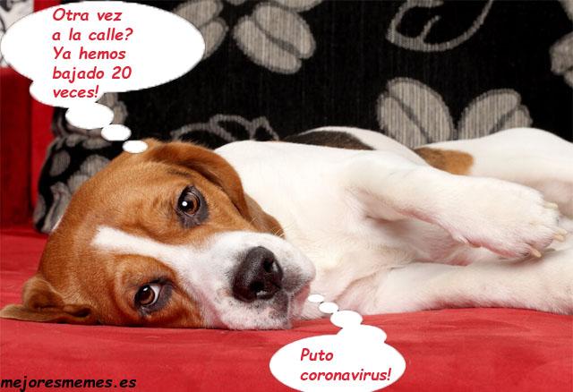 Perro coronavirus humor