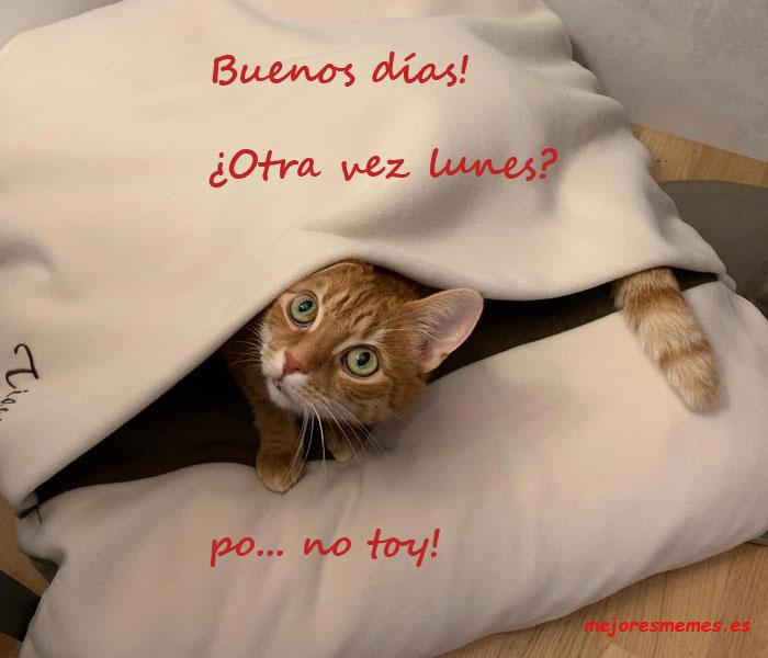 Buenos días gato lunes no toy