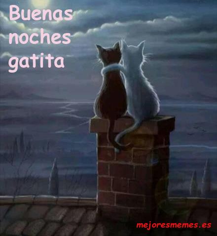 Buenas noches gatita